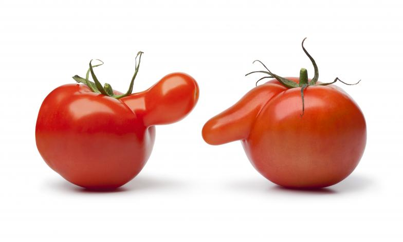 tomatoes with noses